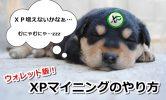 XPコインマイニングのやり方はウォレットがおすすめ!これを見れば誰でもできる画像解説付き!